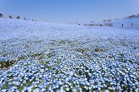 download once upon a secret : my affair