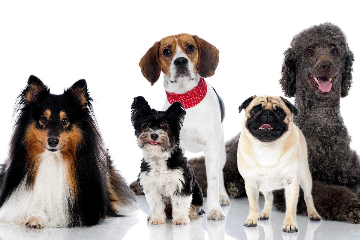 выбор собак с картинками такое