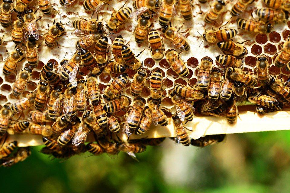 Raccolta del miele dimezzata. La denuncia di Coldi...