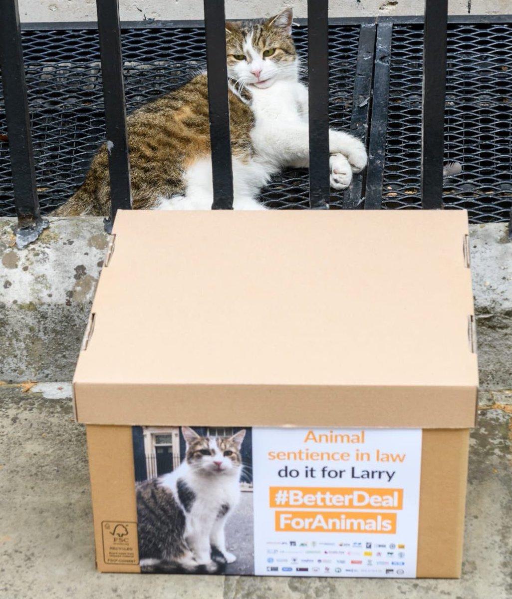Larry the Cat (@Number10cat) | Twitter