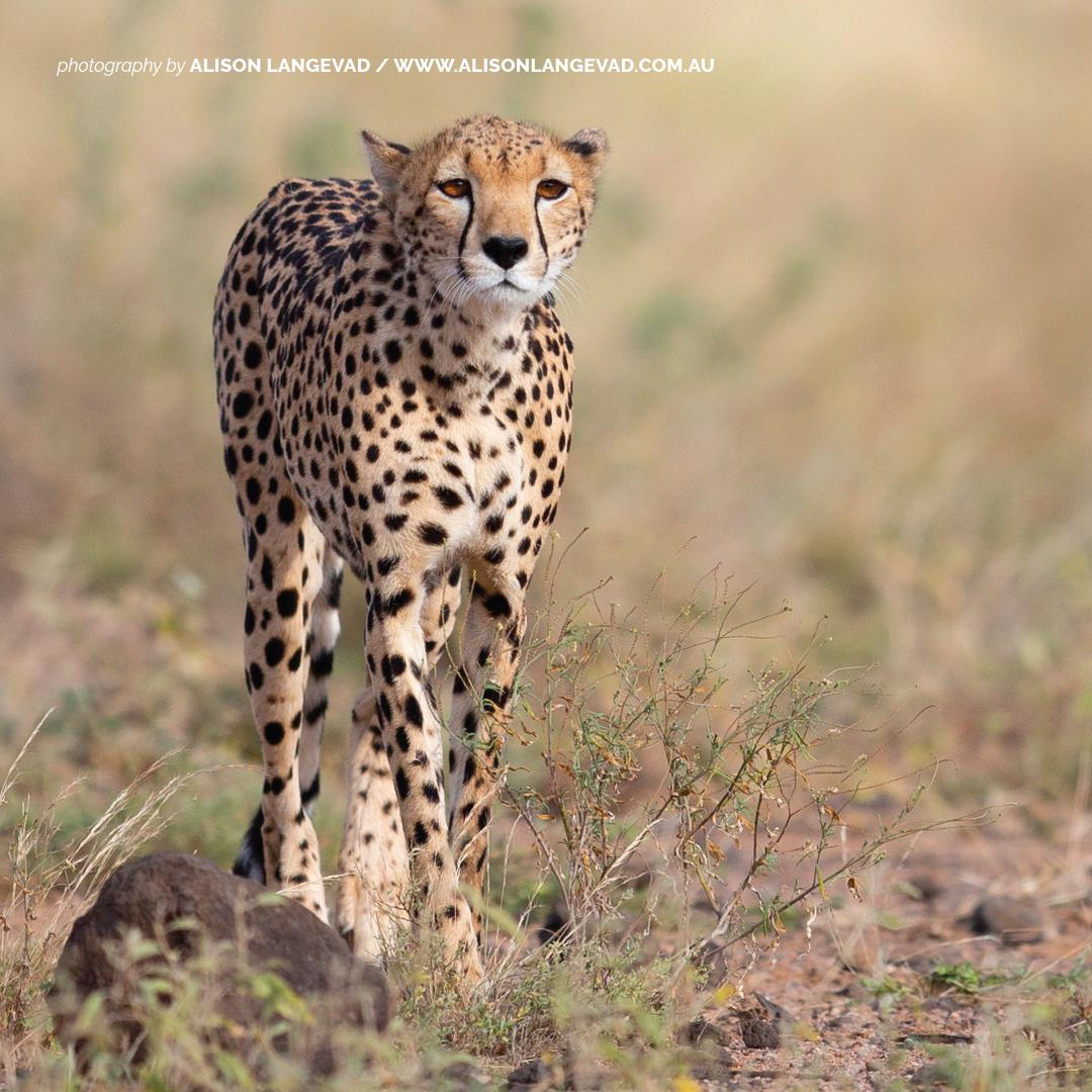 AWF (@AWF_Official) | Twitter