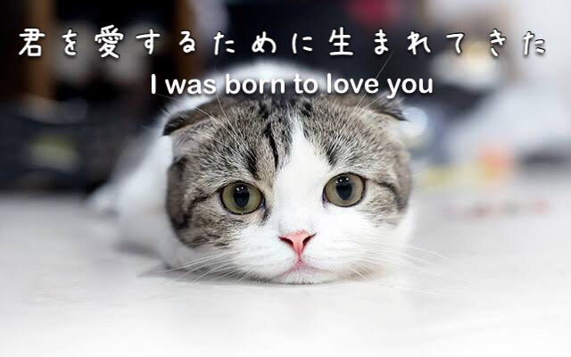 きみを愛するために生まれてきた💓 kimi wo aisuru tame ni umaretekita  I was born to love you  #love #nihongo #japanese