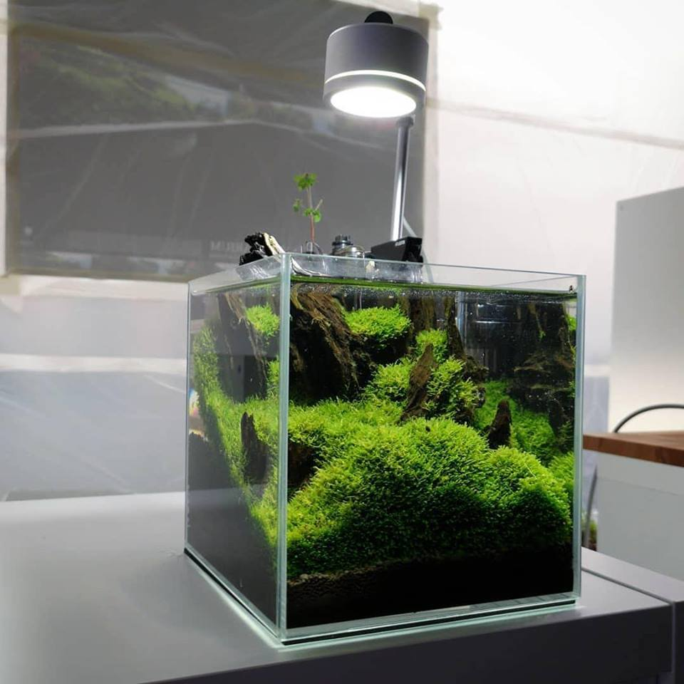 Aquarium Talks בטוויטר Aquascaping Is The Craft Of Arranging Aquatic Plants Focus On Plants Rather Than Fish These Are Also Called Dutch Aquariums But The Dutch System Doesn T Use Driftwoods Or