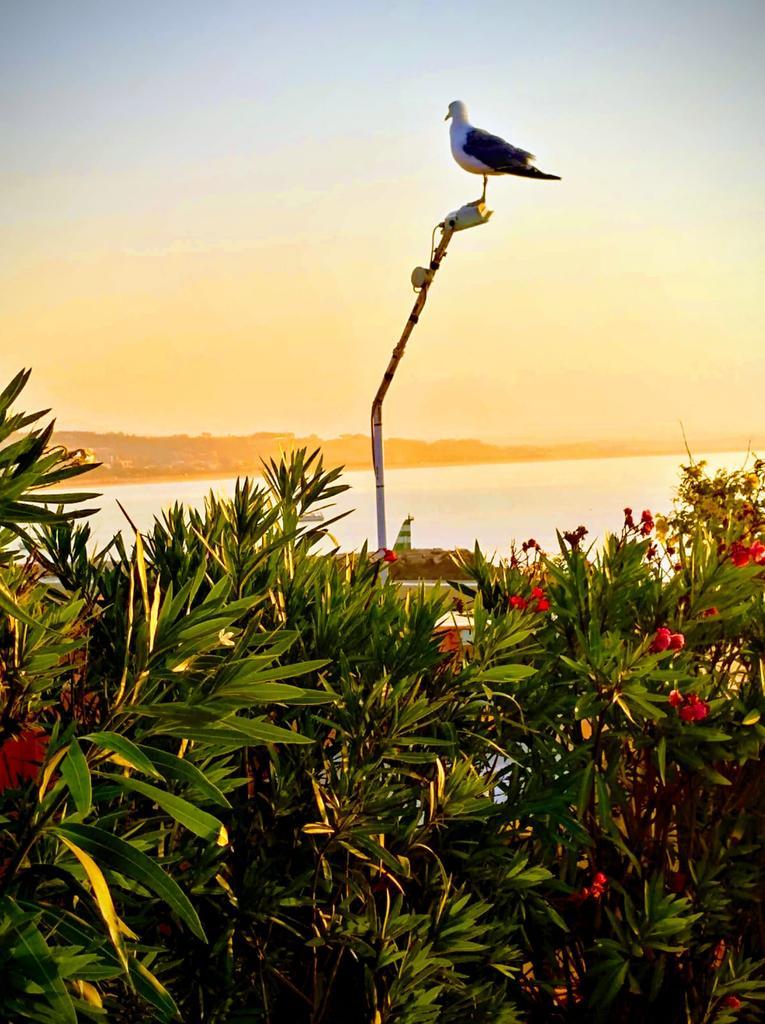 Morning has broken like the first morning Blackbird has spoken like the first bird Praise ....🙏💙