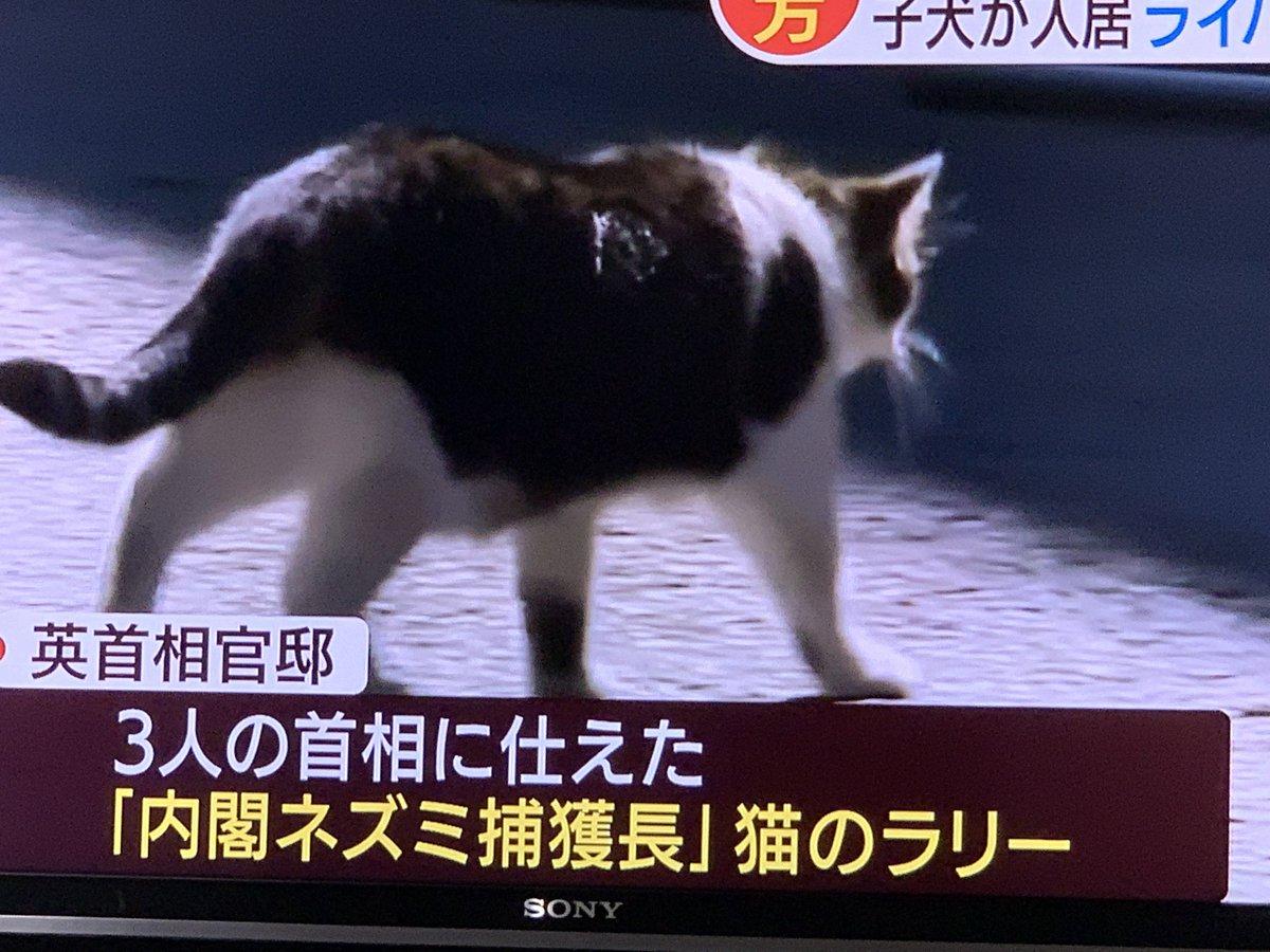 ㇻㇼ ちゃん is big in Japan https://t.co/8JlbVNNXh7