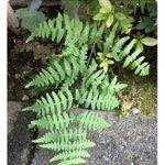 植物に詳しい悟空が出現した結果?さらに植物に詳しいべジータが出現した!