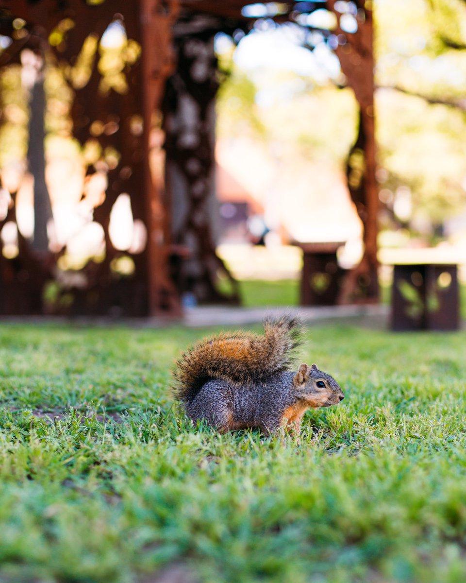 The Unbeatable Squirrel Girl (@unbeatablesg) | Twitter