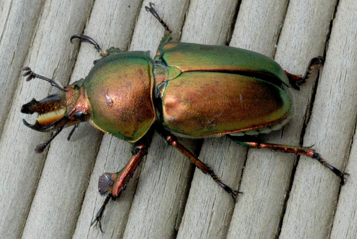 Ainsley S On Twitter The Best Thing About Beetles Is How