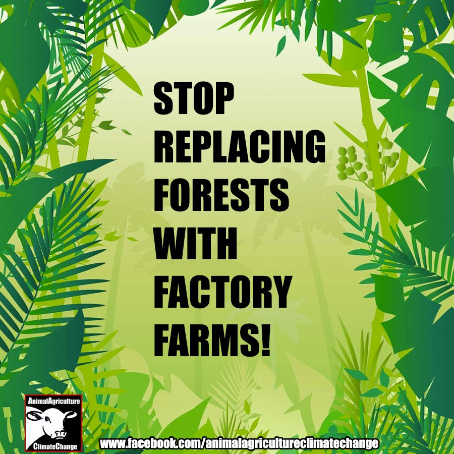 We all know the main cause of the Amazon fires - factory farming! This must stop! How do we stop it? Stop eating meat.   #GoVegan #PrayforAmazonia #PrayforAmazonas #AmazonRainforest #AmazonFires #Amazon #climatestrike #climateaction  #ThursdayThoughts #AACC<br>http://pic.twitter.com/Fx2143PWns