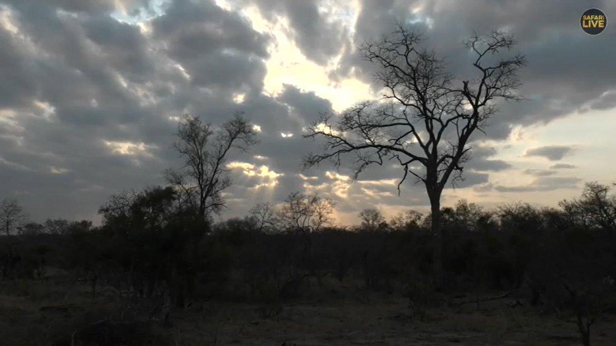 safarilive hashtag on Twitter