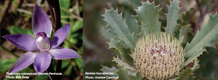 @TSR_Hub We've been tweeting non-plant #untweetables all week, but let's remember that 3/4 of Australia's #threatenedspecies are plants! 🍃🌿🌳 🌼💮🌺🌻🌹🥀🌸 #WildOz #ThreatenedSpeciesDay nespthreatenedspecies.edu.au/_images/News/2…