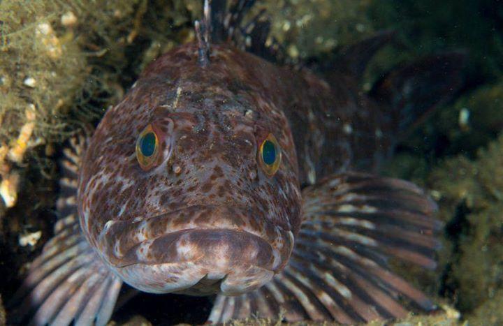 saltwateraquarium hashtag on Twitter