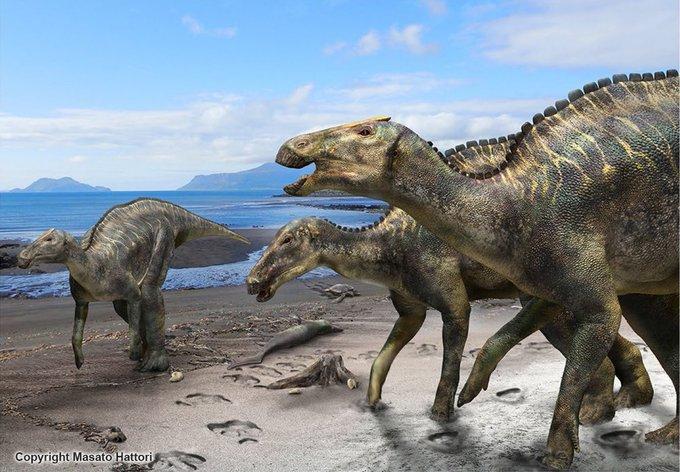 Giappone, scoperta una nuova specie di dinosauro vissuto 72 milioni di anni fa