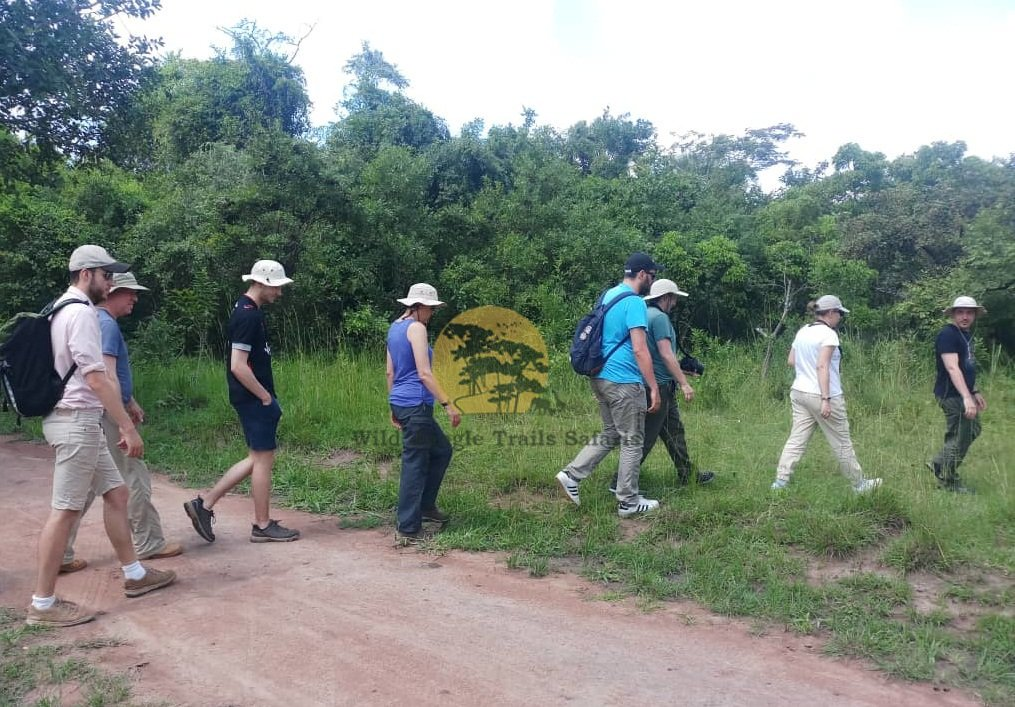 A nature walk is the perfect way of getting so close to wildlife and experience the wild. https://t.co/TlsWHTi1TL #Ugandasafaris #safarisUganda #Ugandasafari #safariUganda #Ugandatours #tourUganda #toursUganda #Ugandatour #visitUganda #Ugandasafaristours #wildjungletrails https://t.co/w35E8gL6Jc