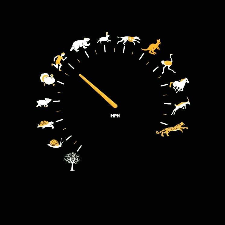 Смешная картинка про скорость, свое фото картинку