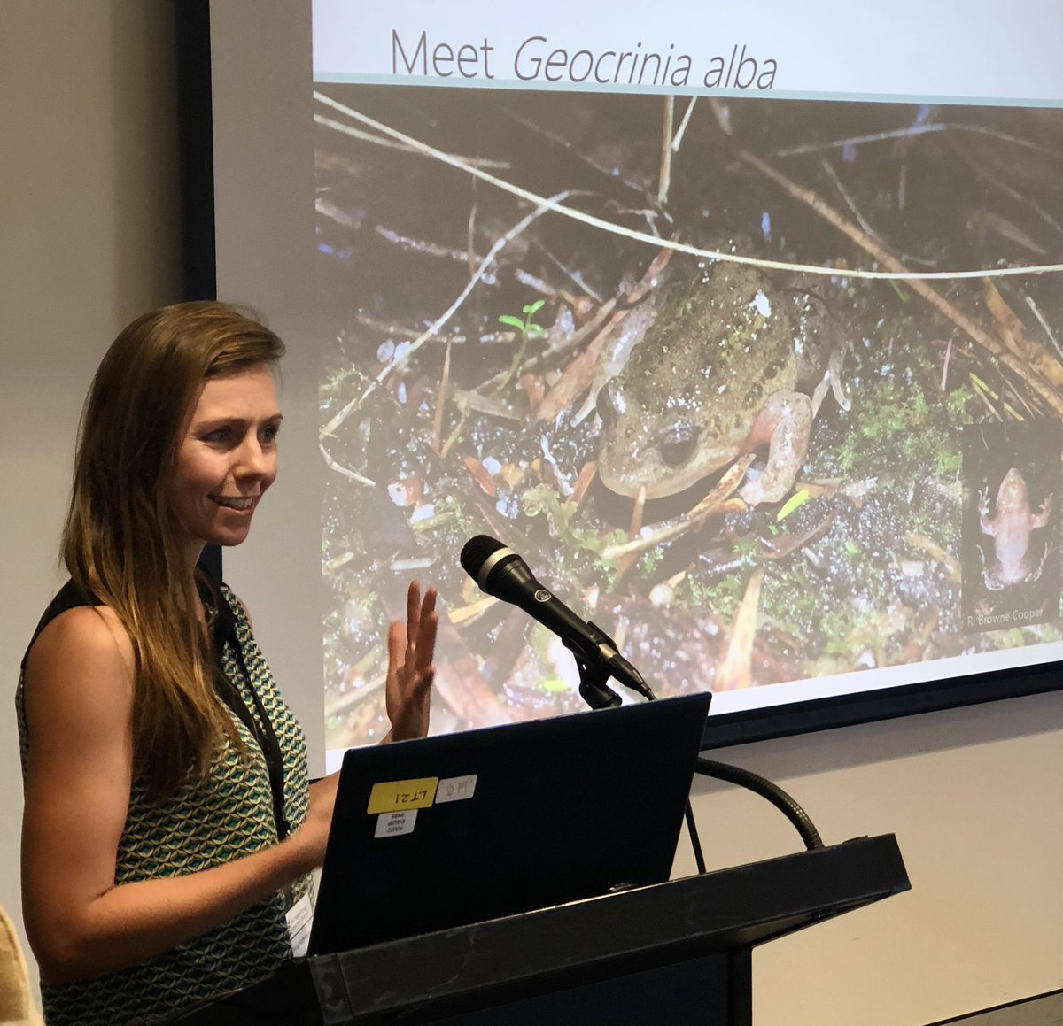 @em_hoffmann at #TSforumWA on incredible efforts of Geocrinia Recovery Team to save the white-bellied frog, WAs most threatened frog species. And new research on what makes a good site for this fussy species. Are summer conditions the crux? @Science_DBCA @BiolSci_UWA