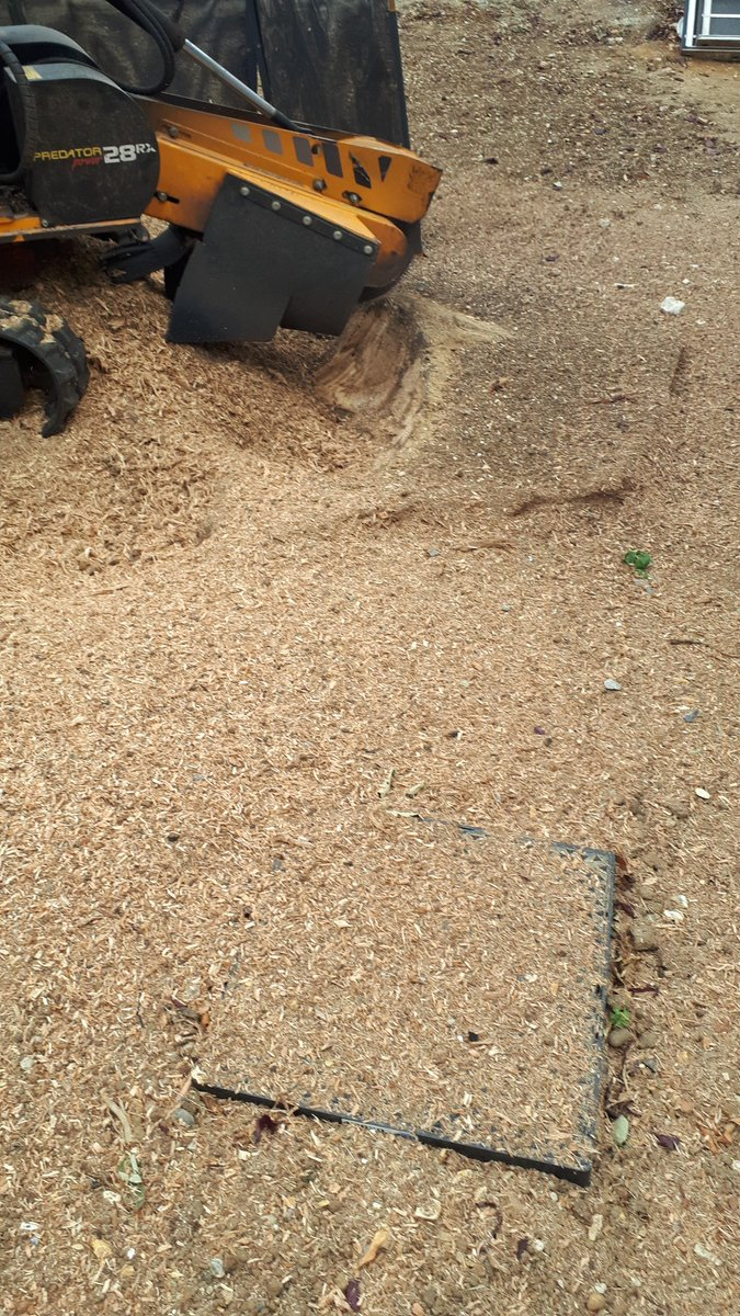 Essex Tree Stump Grinding a large oak tree stump, near Barnston, Dunmow, Essex. The ground will now be prepared for seed…