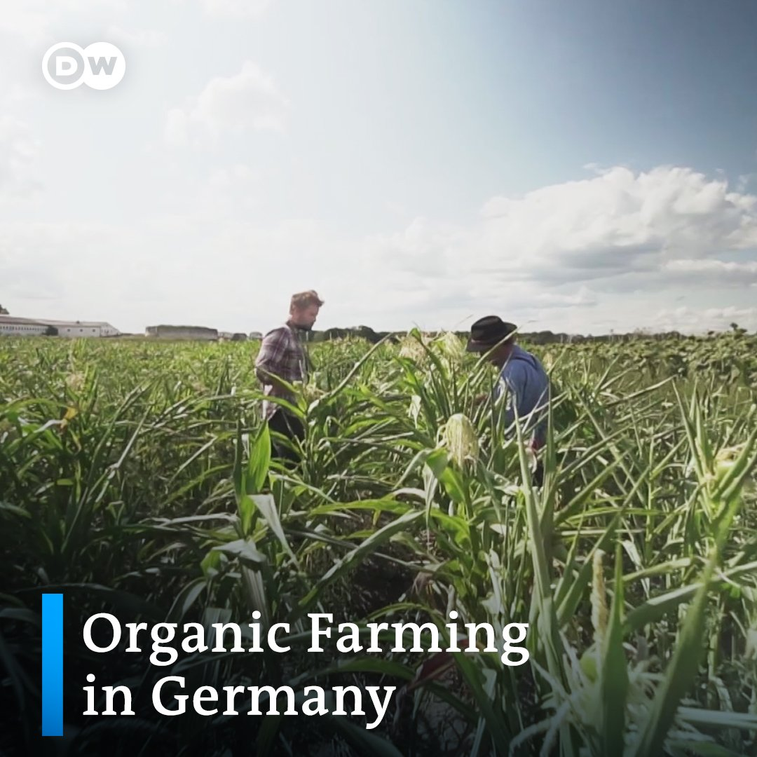From soil to the bowl: How the German Bioboden cooperative is able to work without the influence of big agriculture companies.
