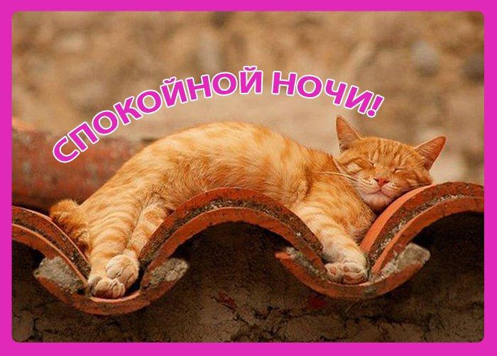 Спокойной ночи картинки прикольные с животными чтобы переслать, май