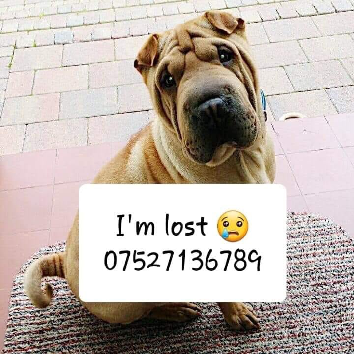 🙋🏻 ♀️Anne Green 🐕🐾🐈 Tweeting for #StolenRuby