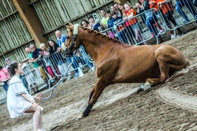 A partir de 16h, venez découvrir un spectacle équestre à l'esplanade du zénith 🐴🐎#FoiredeCaen #Spectacle #chevaux https://t.co/1RS1mNUraA