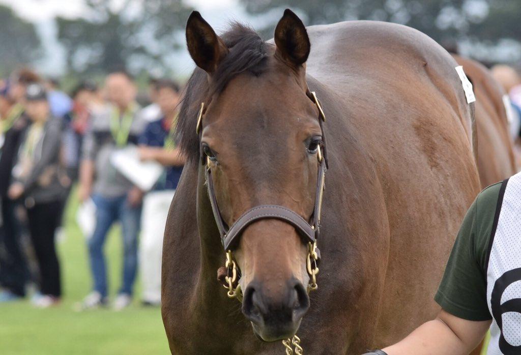 ラフォルジュルネの18  1泊2日の募集ツアーで1組目に登場してきた同馬。可愛らしい顔立ちに惹かれました😁 父・ルーラーシップに似た雄大な馬体と、周りに動じない様子が印象的。 牝馬の実績が目立つ松永幹夫厩舎というのも頼もしい限りです!