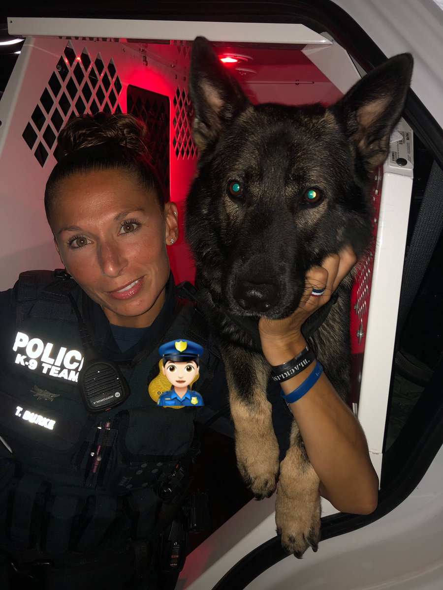 Day 6 of 7. We're not tired, you're tired! #gsd #k9 #workingdog #tired #keepgoing #ithinkican #k9apart #livepd #livepdnation<br>http://pic.twitter.com/F8c8JpWFAe