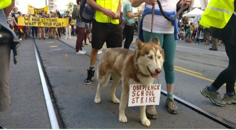 🌲🌲🌲🌲🌲🌲🌲🌲🌲 CANINES at #ClimateStrikes 🐶 🐶 🐶 🐶 🐶 🐶 🐶 🐶 💙