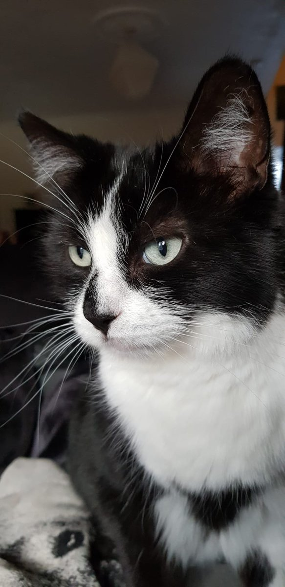 #WhiskersWednesday Darcy