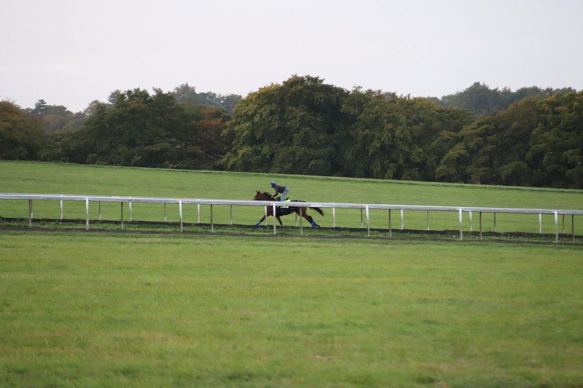 誰でも最初からすごいわけじゃない。ゴスデン厩舎に来たばかりのときは調教で全然乗せてもらえなかった人が今は世界最強馬の担当をしている、素晴らしい話。写真は昨年の凱旋門賞1週前の金曜朝、たまたま自分が撮影できたウォーレンヒルを駆け上がるエネイブル。 #Enable https://t.co/H7iEy32vJb