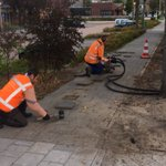 10 Linde bomen langs de Rembrandtlaan in Bleiswijk @Lansingerland waren door werkzaamheden en nieuwbouw sterk achteruit gegaan. De bomen hebben een boost gekregen, lees: lucht en voeding. Het resultaat hiervan is de komende jaren zichtbaar, meer blad en langere groeischeuten.