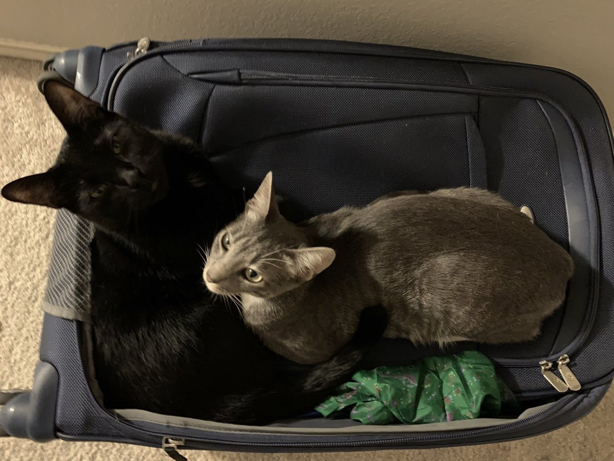 @AdviceChicken Catte and Kitten