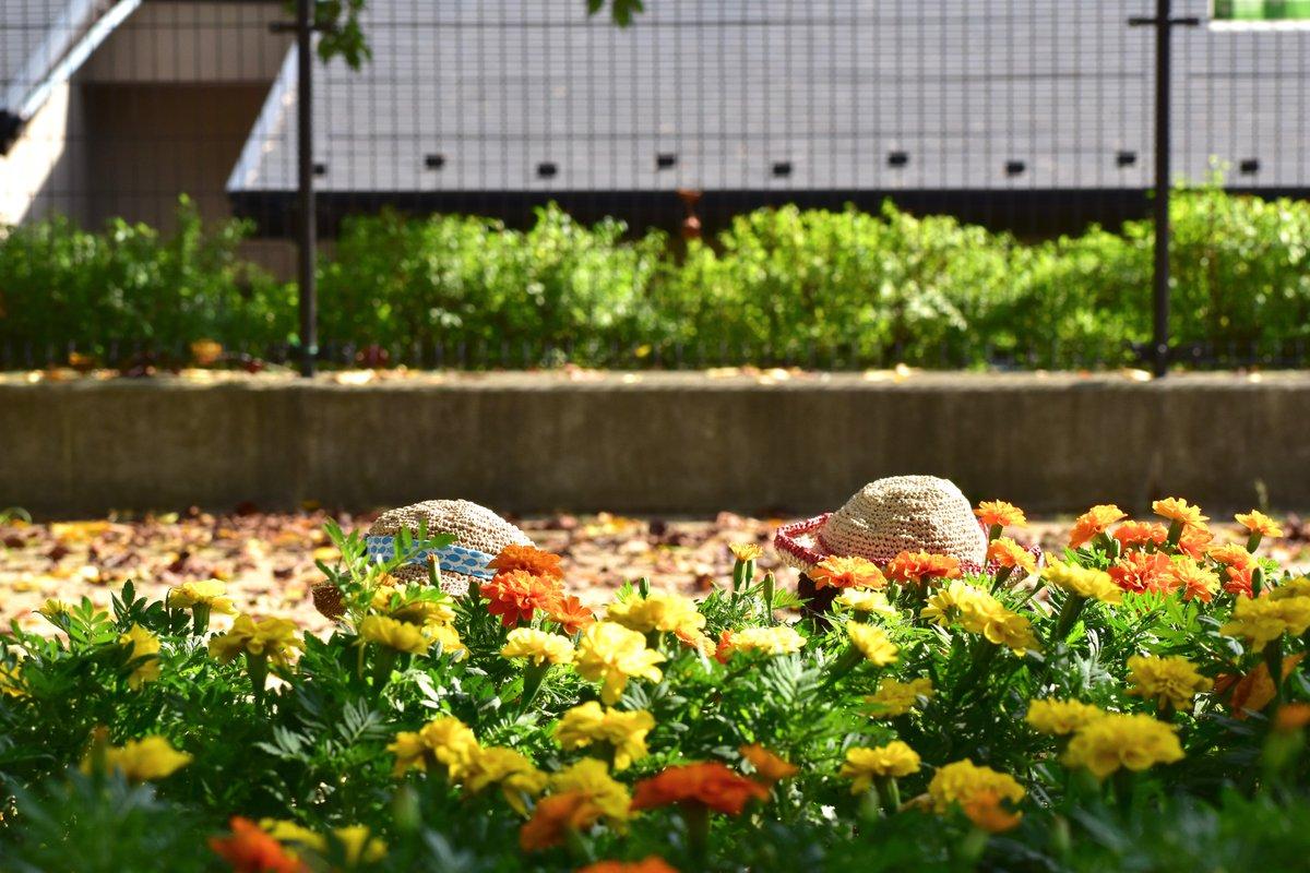 今日は、ご近じょのこうえんにおさんぽに行たら、花がいぱいさいてたので「みんな、ぼくは、東京トガリです! もうちょとで3才です! 今から、ニンジャ歩きします!」て言て、『もうすぐ、おたんじょ日のうた』をうたいながら、花いぱいのまわりで、カコよくニンジャ歩きしたら、おもしろかたです!
