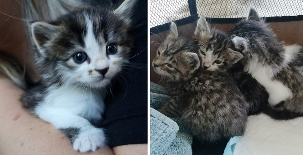 Rescuers save kittens from a shed and come back for their cat mom to reunite them. See full story and video: lovemeow.com/kittens-rescue…