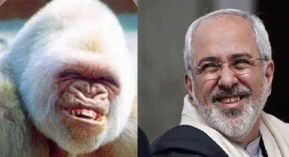 Image result for zarif monkey