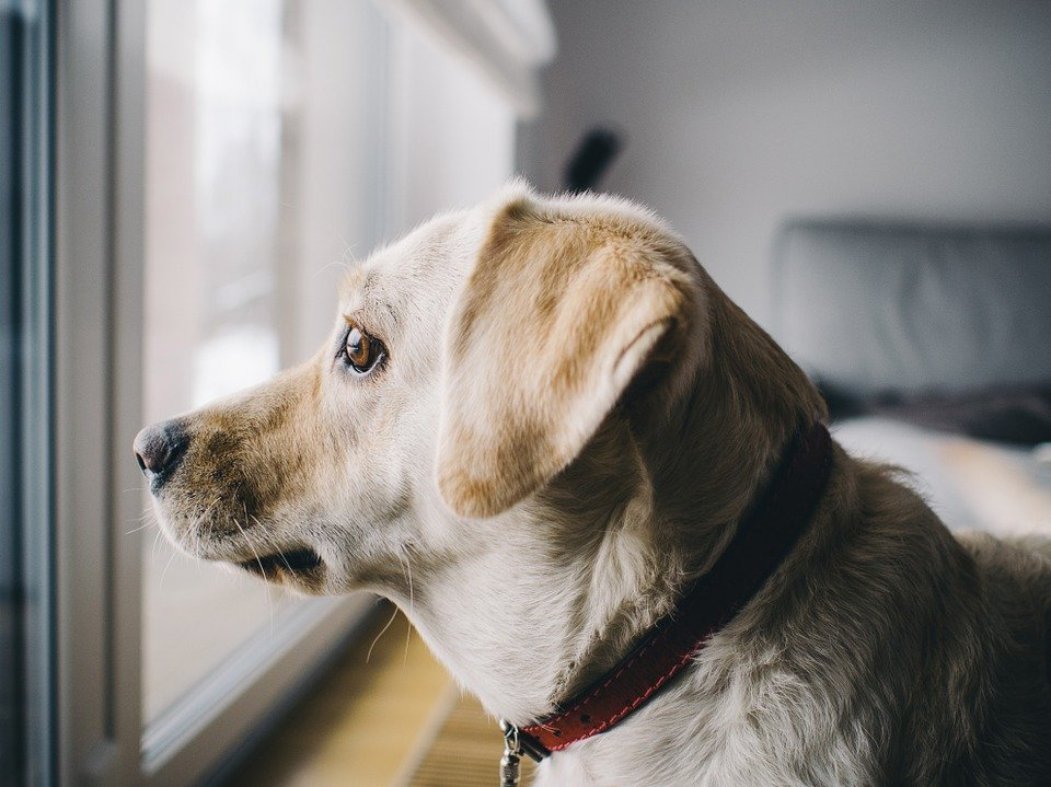 Is my dog anxious or just bored? What does he do all day while I'm gone? How do I manage separation anxiety? We'll cover these topics and more at our Behavior and Training Lecture: Leaving Your Dog Home Alone, on Monday, Sept. 16. Register now! readr.me/c98df