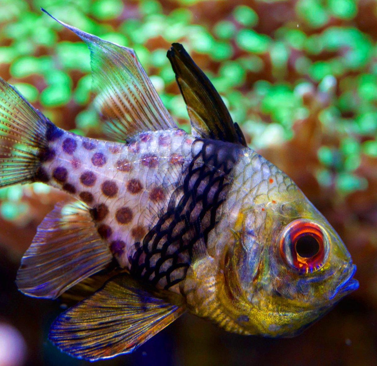 best saltwater aquarium fish