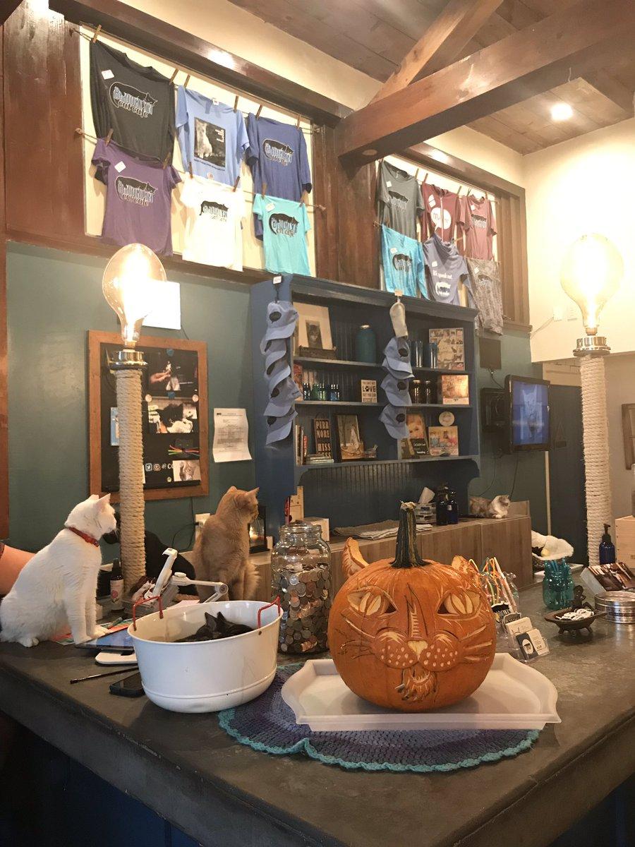 NYの猫カフェはマンハッタンのMeow Parlor(NYで一番古い猫カフェ) とKONEKO,ブルックリンにあるTheBrooklynCatsCafe(唯一の非営利でボランティアさんと保護団体さんで運営)保護猫カフェだけだと思うのですが昨日ブルックリンの猫カフェでボランティアさんにお伺いしたお話しがとても印象的でした🐈🐾