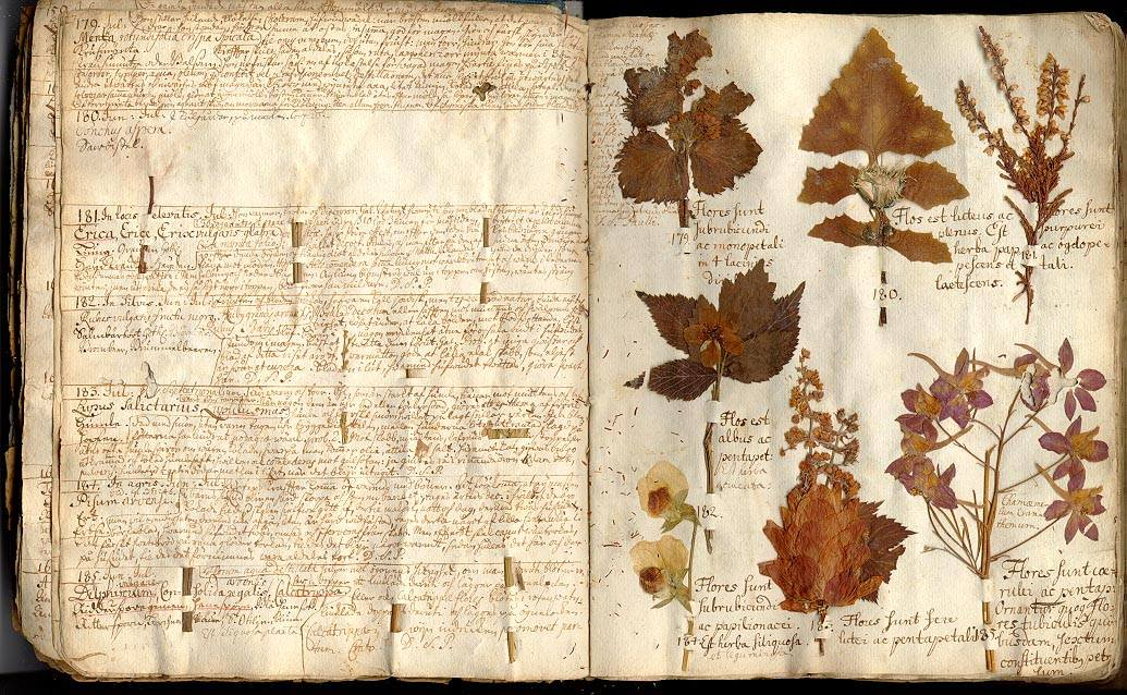 дошла древние травники лечебники картинки следует