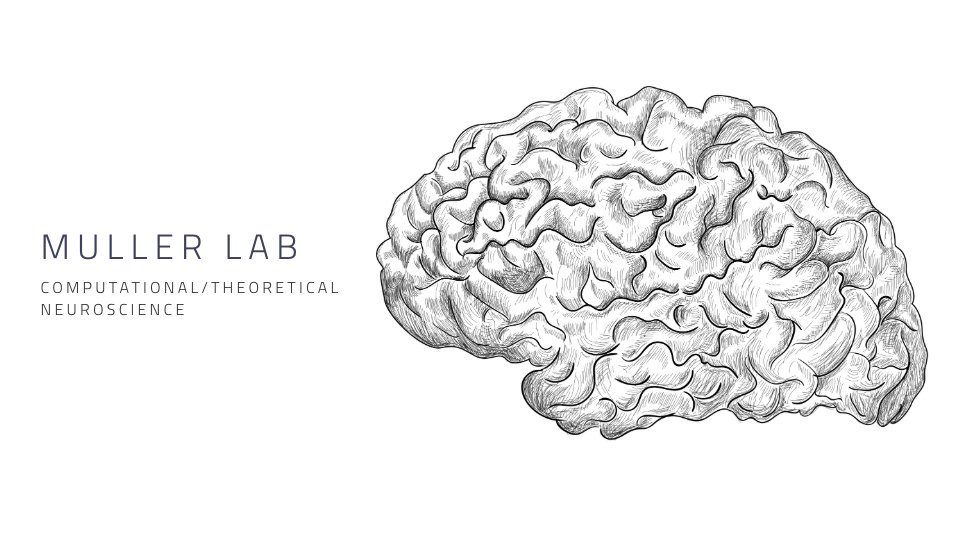 PhD and postdoctoral positions are now available in the @_mullerlab, including two joint positions with @JulioMTNeuro. Learn more:  https:// mullerlab.ca/positions.html     #postdoc #PhD #neuroscience #compneuro <br>http://pic.twitter.com/lQ5ghnBSyo