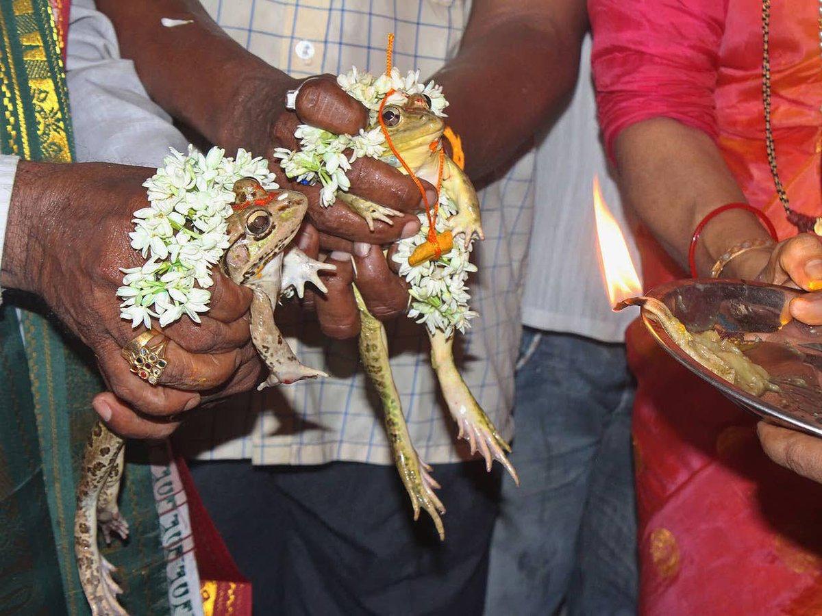 Fuck it frog wedding
