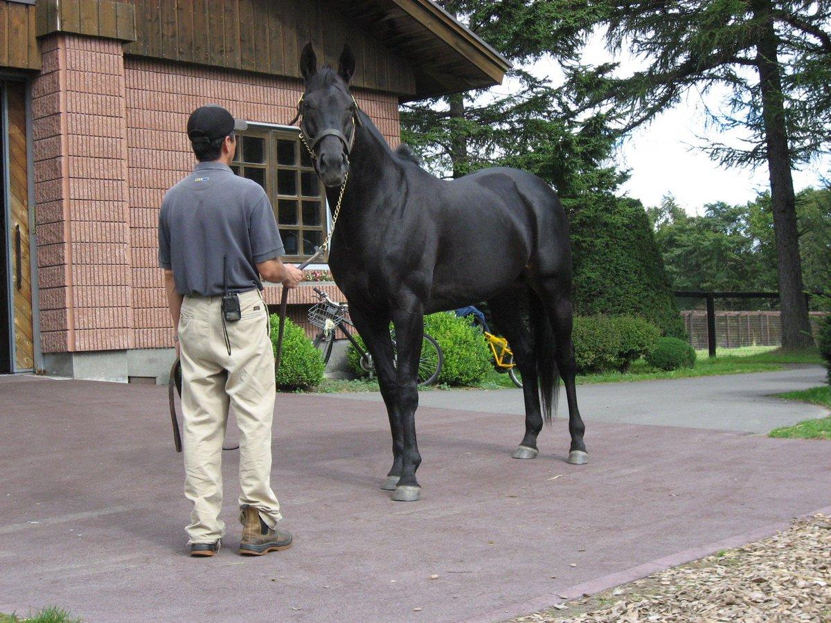 今週は #神戸新聞杯。2002年に制したのは #シンボリクリスエス。ロベルト系らしいごつい体つきで、ダービー2着の後ここを完勝、以後天皇賞秋・有馬記念をそれぞれ連覇するなど時代を代表する名馬となりました。エピファネイアの産駒が今年デビュー。お父さんにももう一花咲かせてもらいたいです。