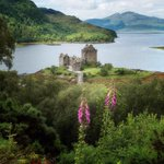 Image for the Tweet beginning: Eilean Donan #Castle really needs