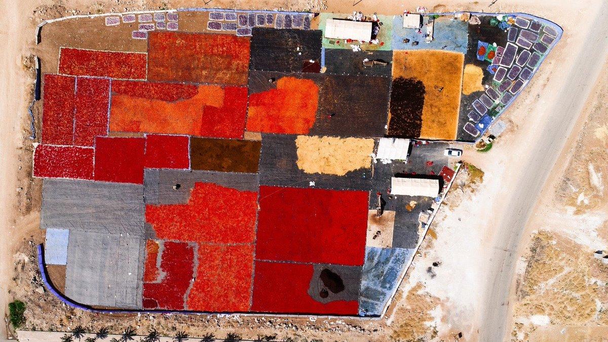Urfa'da isot hasadı...