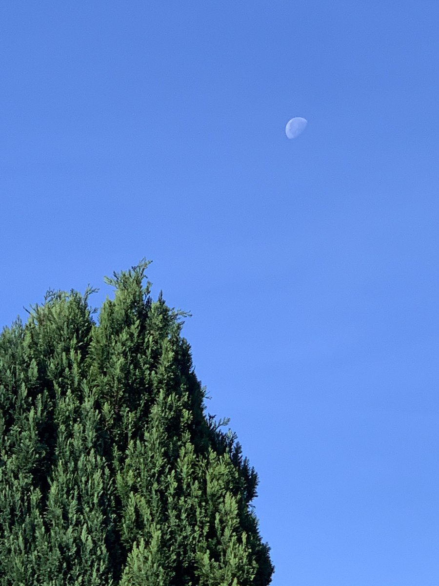 Is it just me or is there something magical about seeing the moon during the day 😁#peaceful #serenity #moonwatch #tranquility