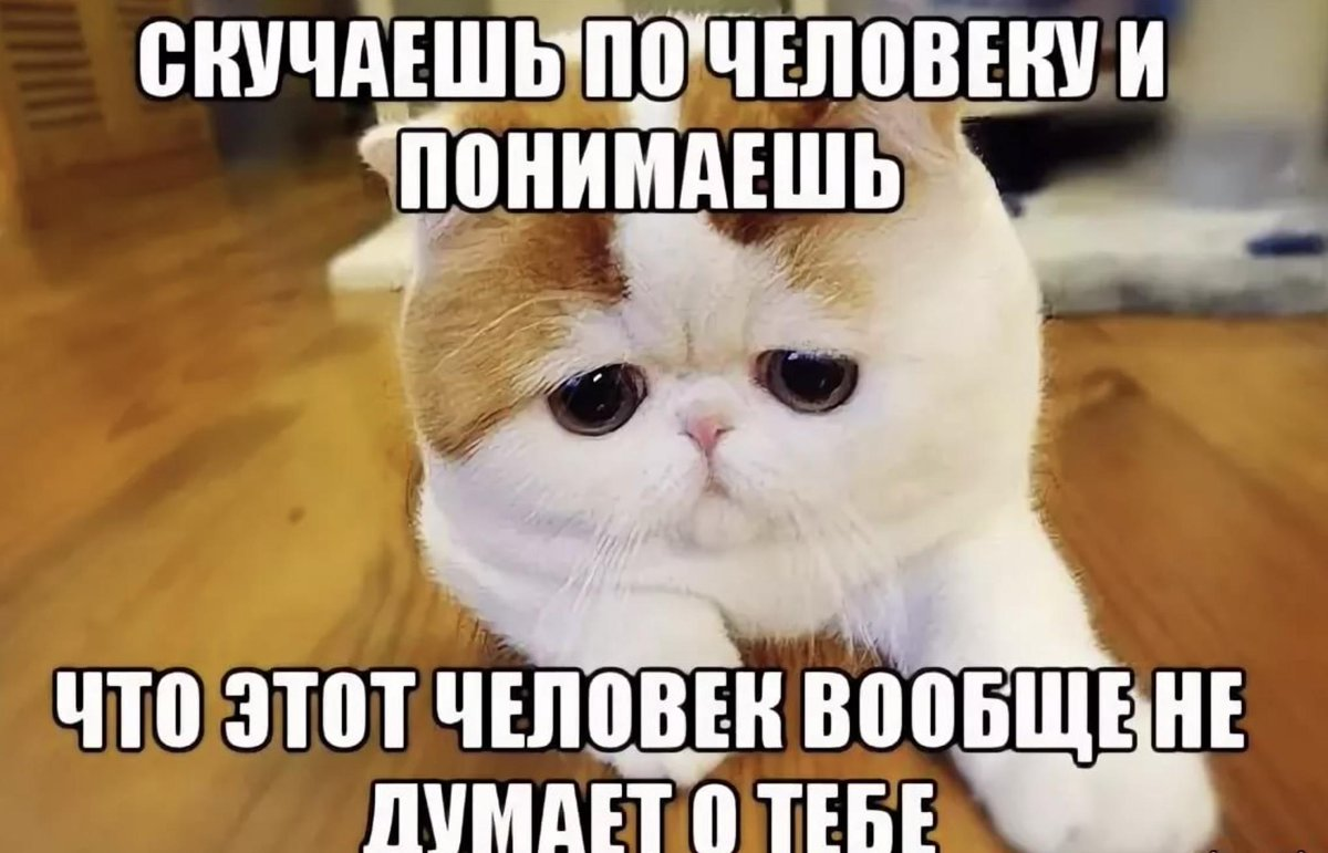 Скучаю по тебе картинки с котятами анимированные