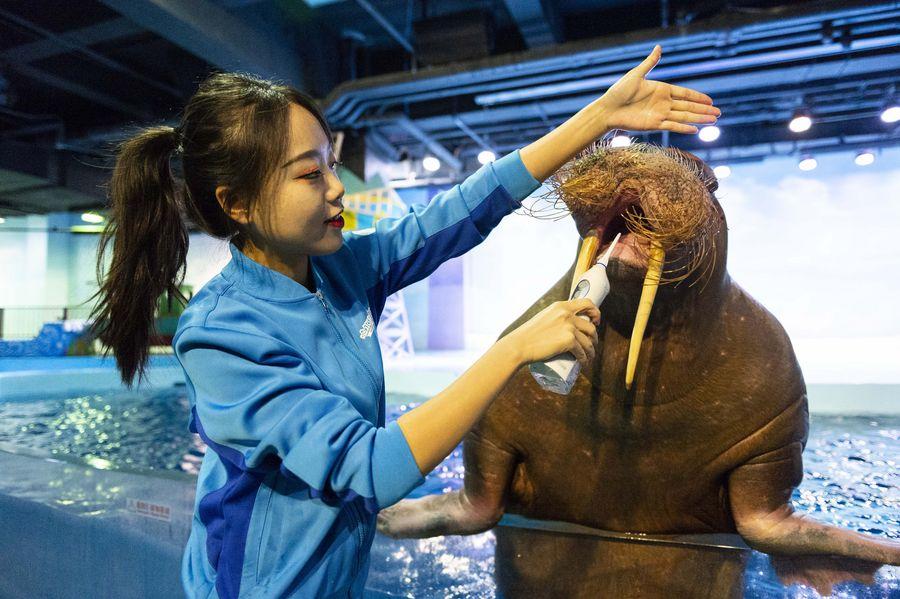 Marine animals got their teeth brushed in Harbin Polarland, NE China, on Sept. 20, China's Teeth Care Day