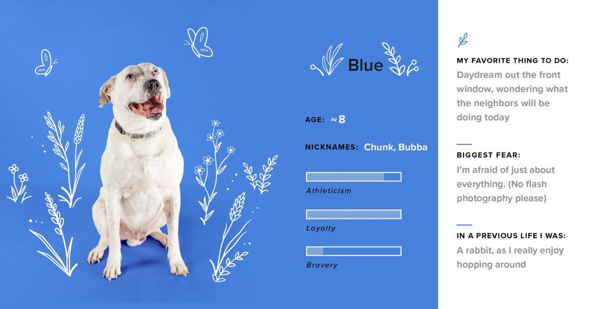 Meet our (not so little) boy Blue! 🦋 #DogsofTG