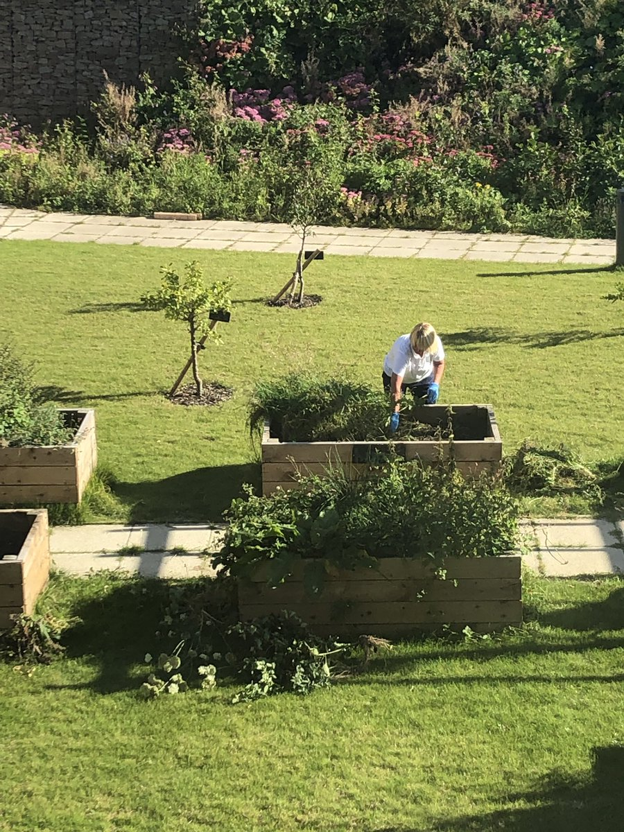 Our lovely HCA Rose harvesting carrots/spring onions and tidying our boxes 😍👏🏼💚🥕🥬 ☀️#multitalentedstaff #garden #crumpsallvale #organicveg https://t.co/WRCzRlzHCJ