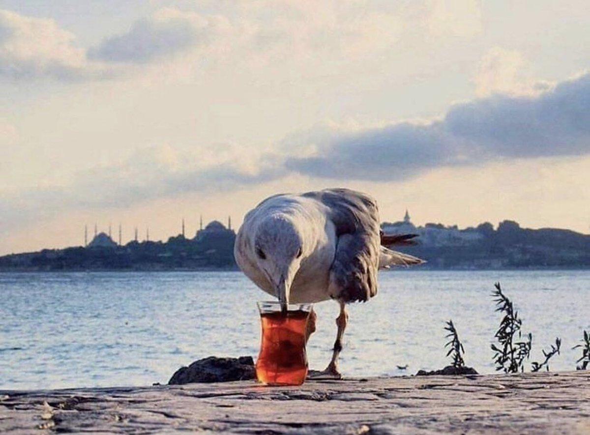 Karaköy'de simidin ardından çay oryantasyonu alan martı :)